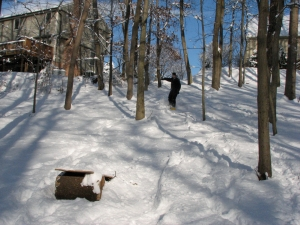 snowboarding-in-the-woods