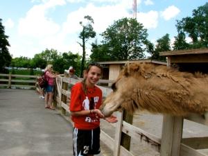 M feeding camel