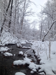 snow pic 3